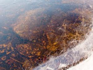 Bildet viser klar stålis. Man ser bunnen gjennom isdekket.